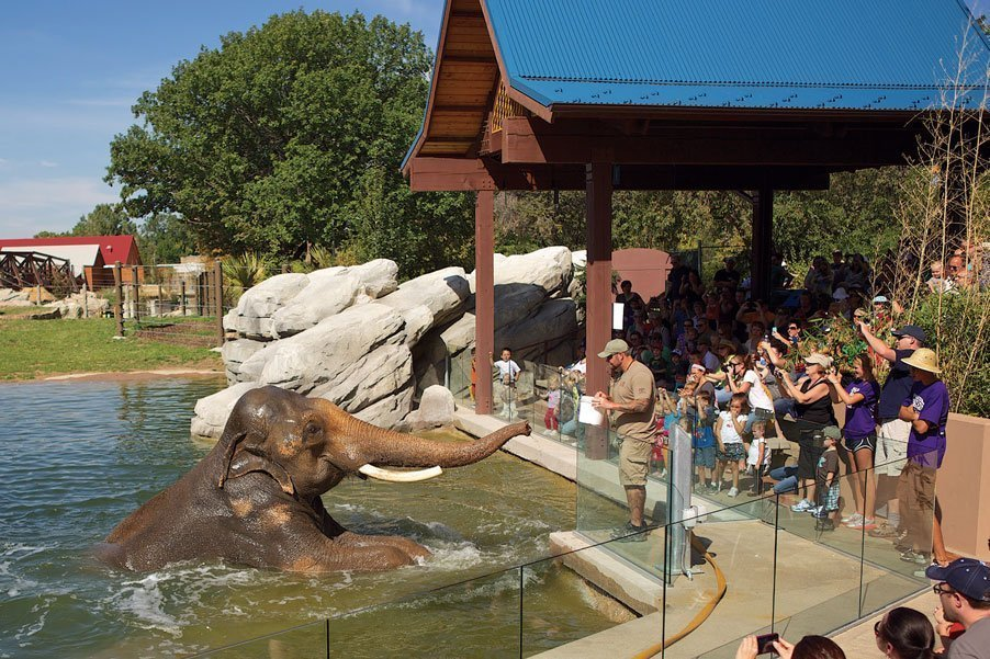 Crowd watching elephant show