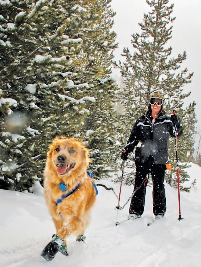 A lady and the best dog on earth, skijoring.
